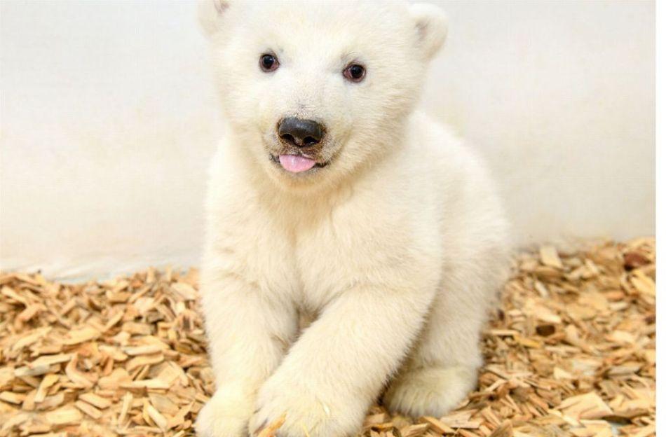 oso polar zoo berlin alemania